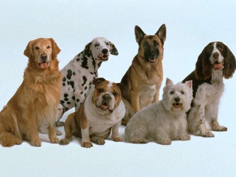 множество пород собак