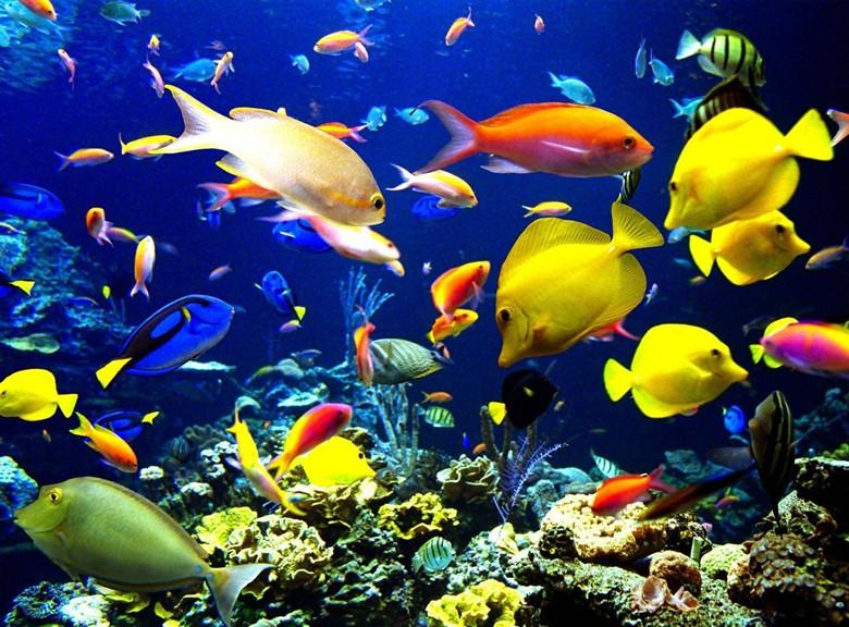 разнообразие рыбок