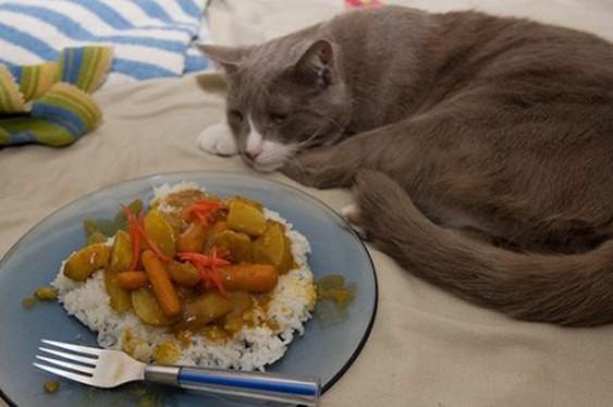 кошка перестала есть