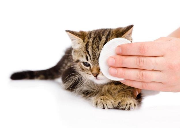 промывка глаза у котенка