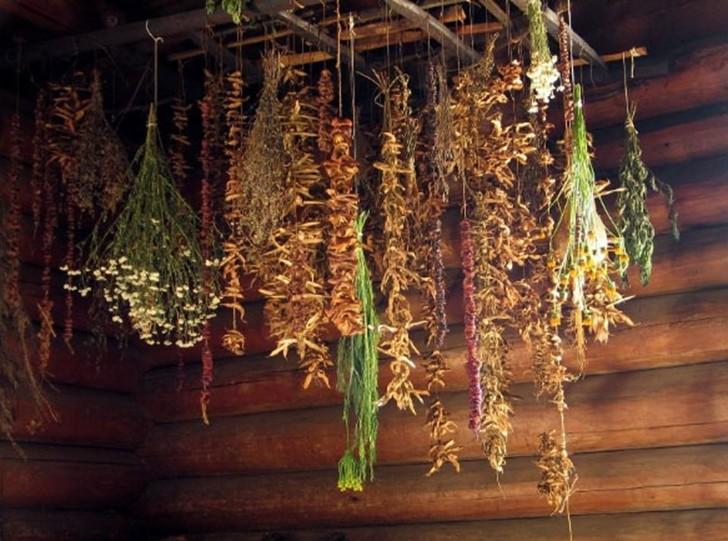 сушка растений на чердаке