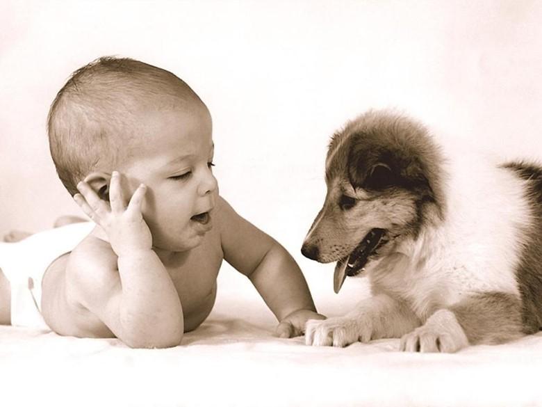 Колли и ребенок