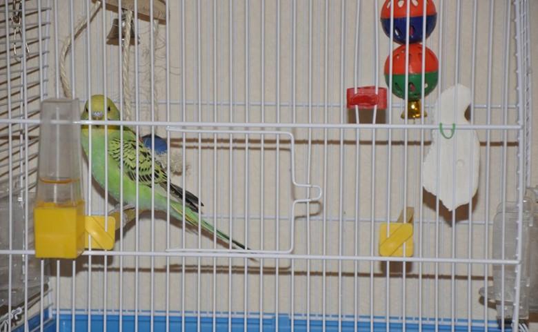 клетка с волнистым попугаем
