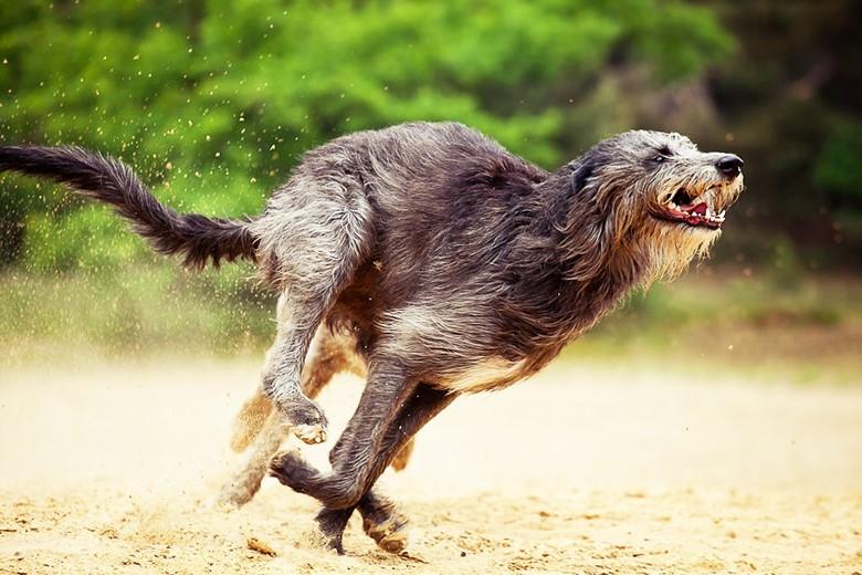 энергичные породы собак