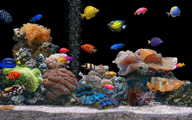 разведение аквариумных рыбок