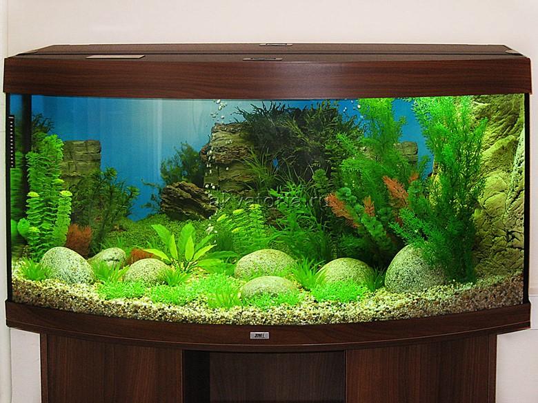 аквариум на деревянной основе