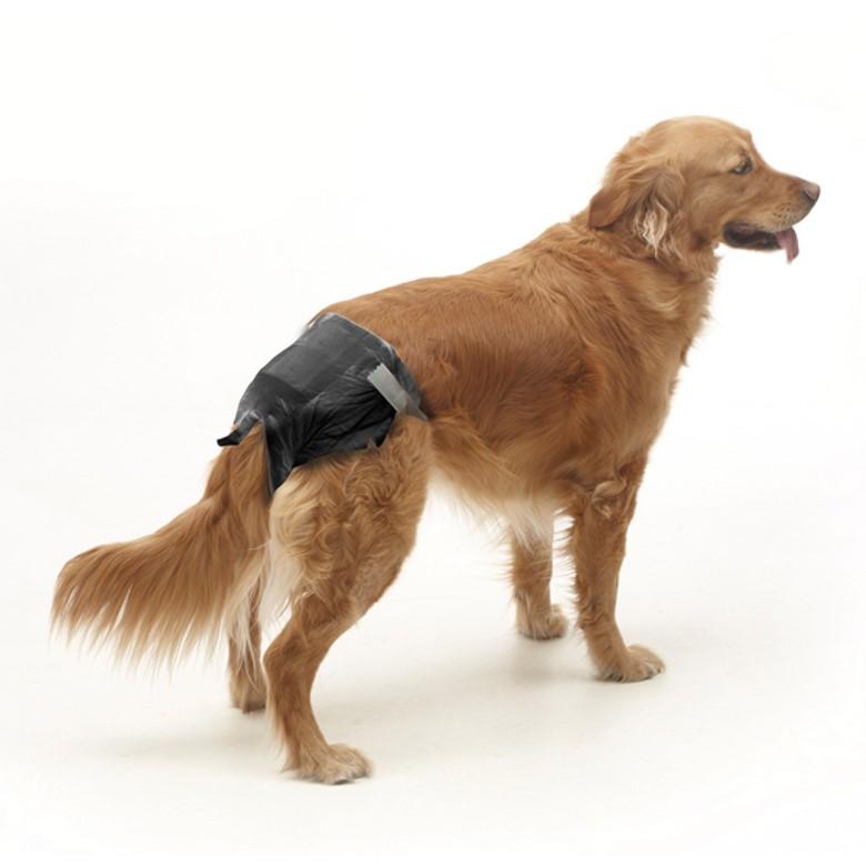 памперс для собак