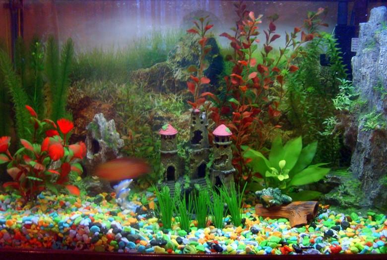 красивый грунт аквариума