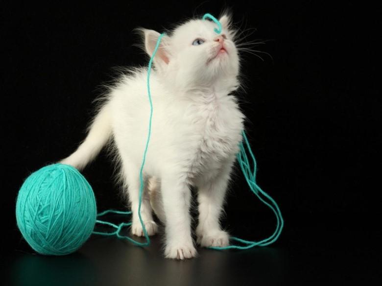 котенок и нитки