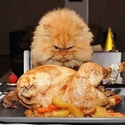у кошки плохой аппетит, фото