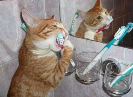кошка чистит зубы