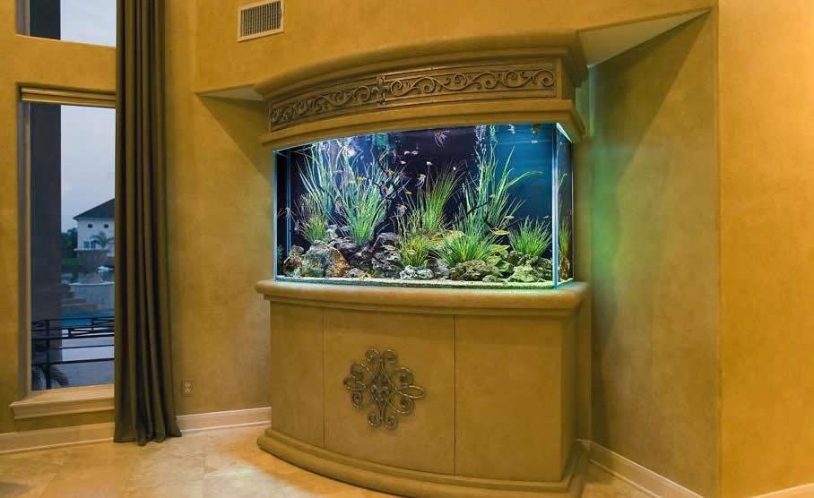 Место расположения аквариума должно быть достаточно тихим и не напротив окна