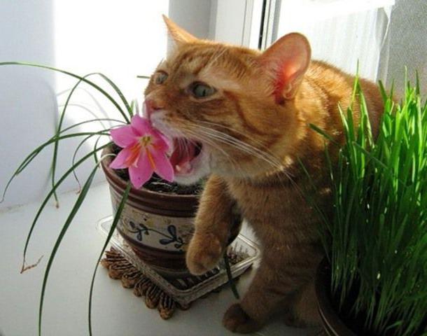 Растения опасные для жизни домашних животных